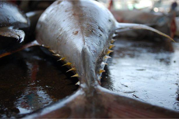 漁業不記帳,海洋資源破產啦!談漁獲申報重要性