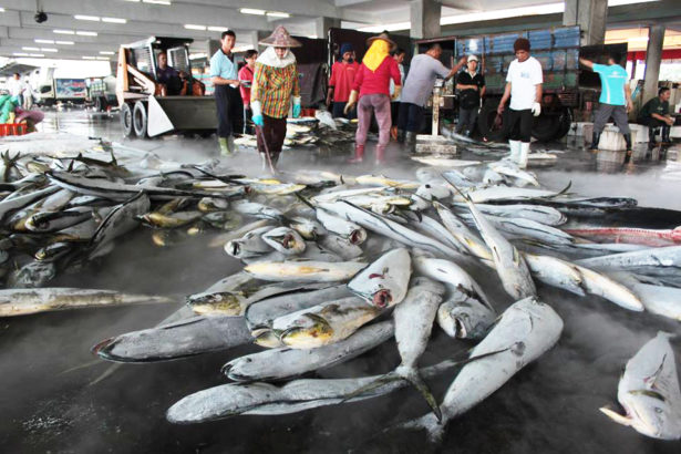 再不改就沒魚可捕 農委會提高罰金 遏止非法漁撈