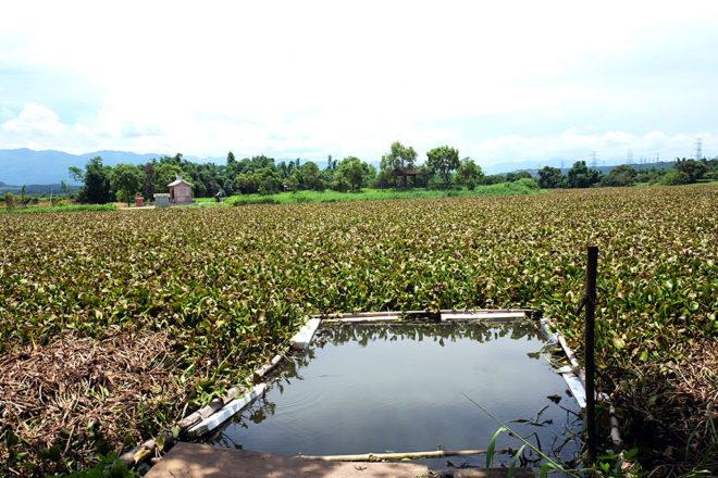 大林埤塘是當地農民重要的灌溉水源地。(攝影/郭琇真)