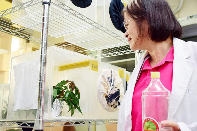 洪巧珍研究昆蟲、昆蟲費洛蒙30年,如今和同事努力開發出可利用的荔枝椿象費洛蒙產品。(圖/潘子祁攝)