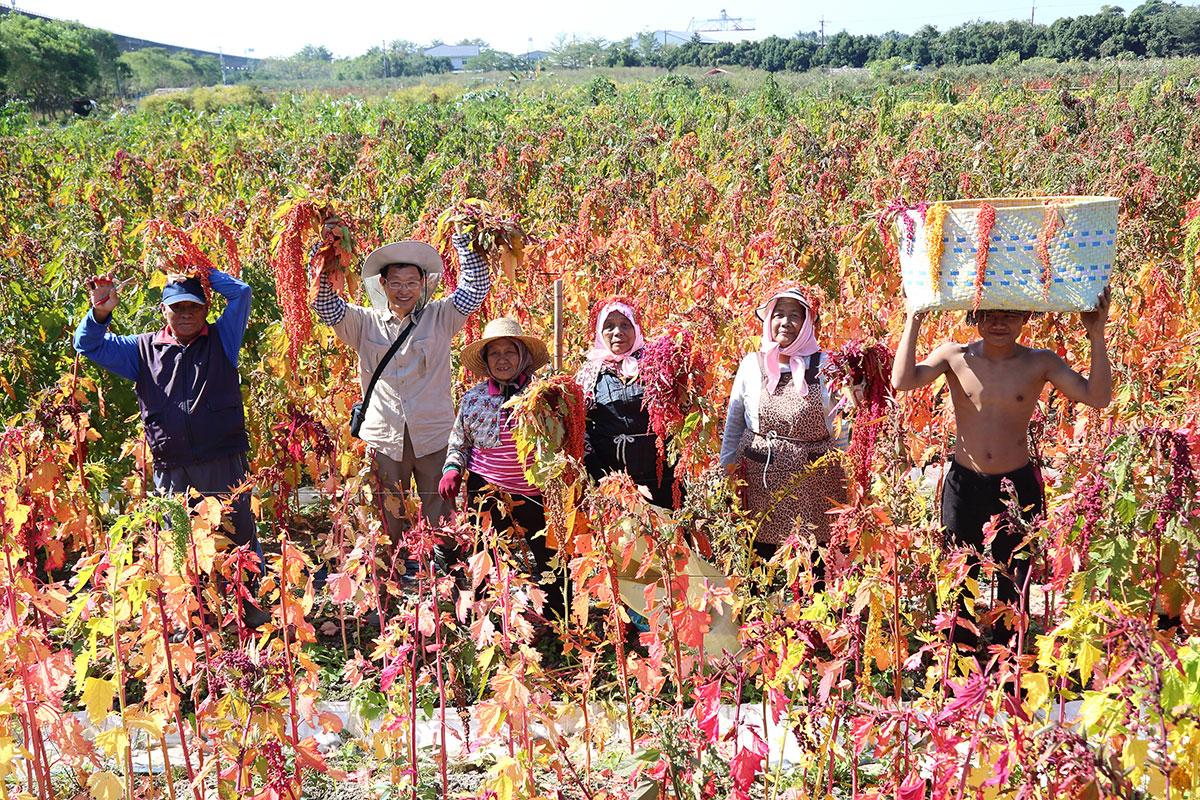 「紅藜幸福契作農友團」即將邁入第6年