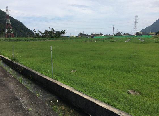 看似綠油油的稻田,其實是種苦茶樹,農民大哥都很有創意,在地取材不浪費。