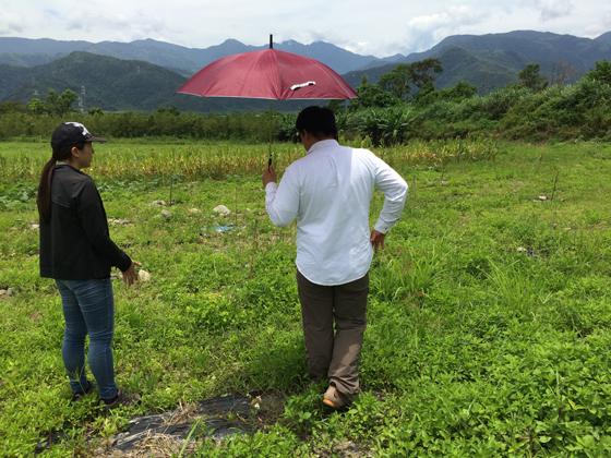 茶改場研究員一起觀察苦茶樹苗生長情形。