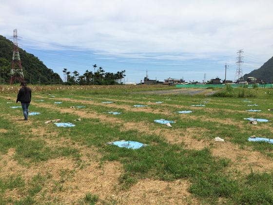 在樹苗附近鋪上抑草蓆,其餘可留一些雜草,在太陽下土壤的溫度會比較低一點。