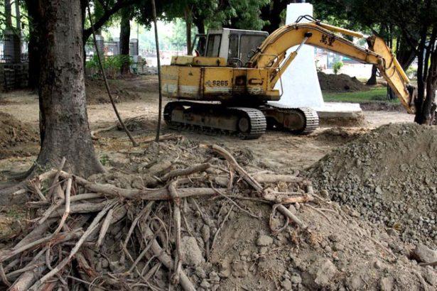 培養園藝專家卻不懂修樹?興大學生連署校樹管理法