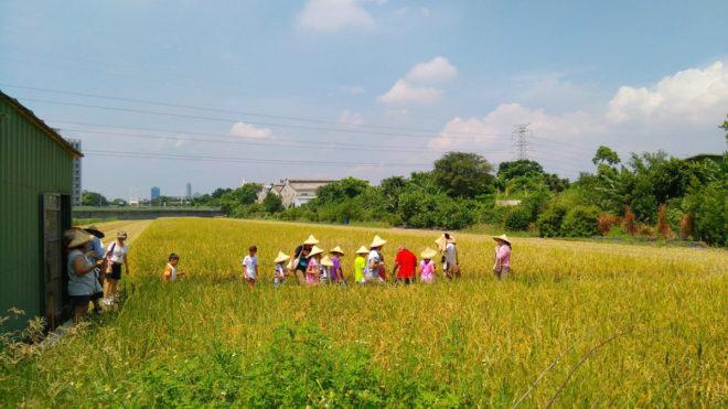 稻田是洲美人美麗的記憶