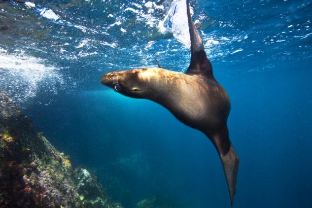 全球122位水下攝影大師 Yorko Summer台灣唯一上榜
