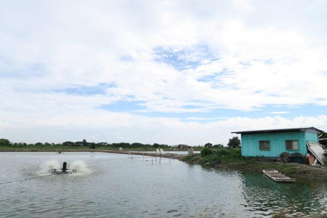 台17線經七股、佳里兩旁,遍布漁塭