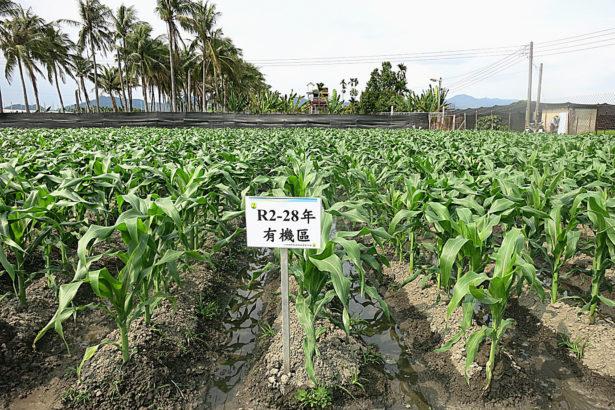 實驗28年 高雄農改場證實 有機、輪作讓土壤更肥 產量不輸慣行農業