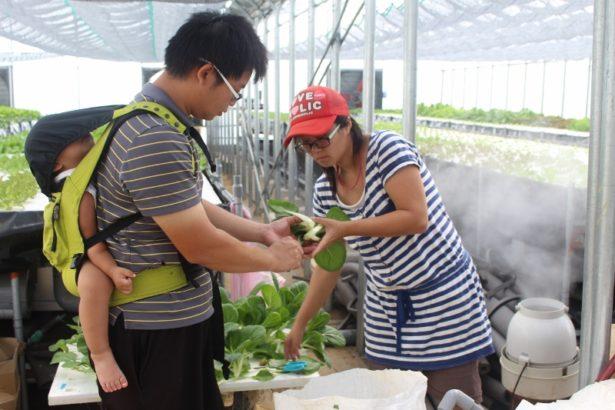 【公民寫手】魚菜共生 讓年輕夫妻從城市回到鄉村