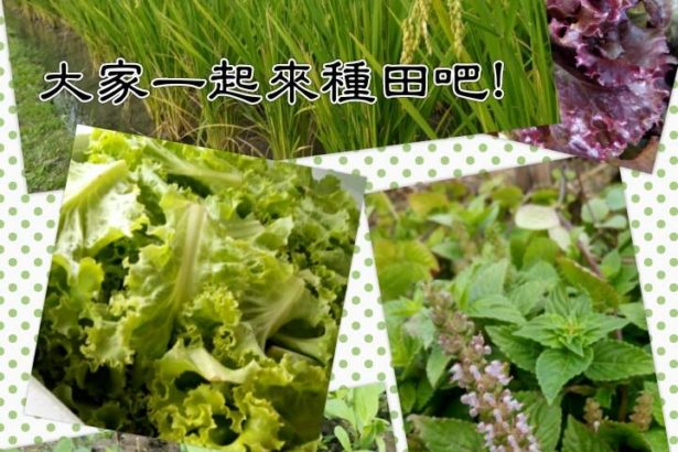 【公民寫手】新竹自然農俱樂部生產者培訓第七期暨假日半農班第一期招生中