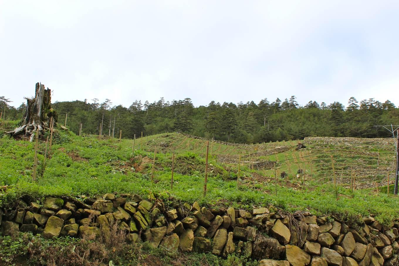 從森林、果園、菜地,到補植小樹苗,左上方的巨木殘樁目睹這塊坡地的開發史