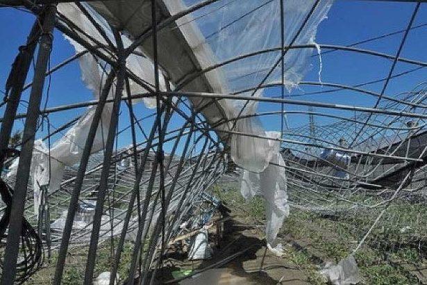 簡易式溫網室在前幾次風災中受災慘重(農試所提供)