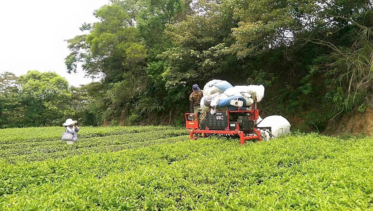 乘坐式採茶機可應用在平緩的茶園。(圖片提供/林和春)