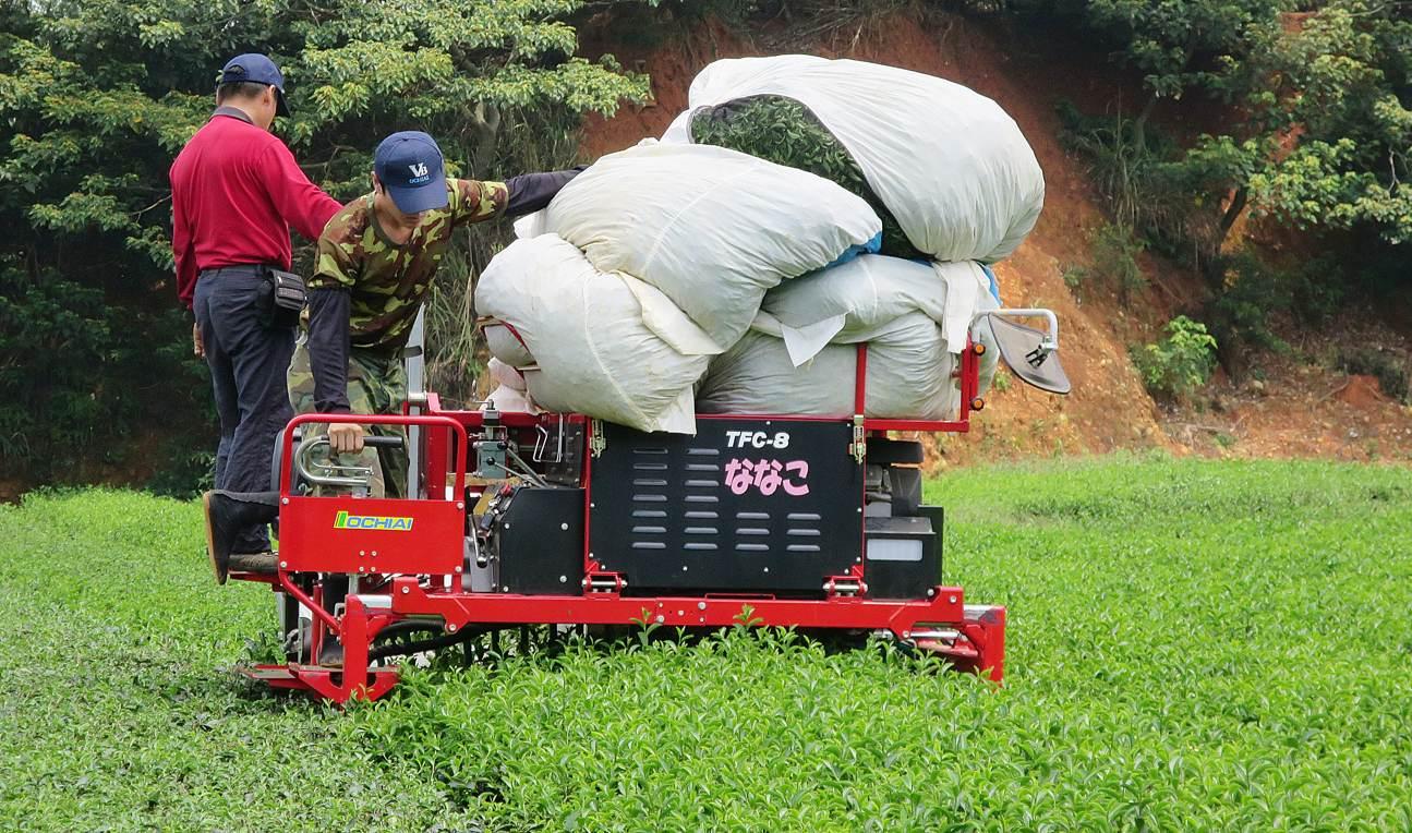 乘坐式採茶機(圖片提供/茶改場) (1)