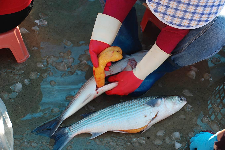 取烏魚卵需由專業取卵手負責,小心翼翼不能劃破魚卵