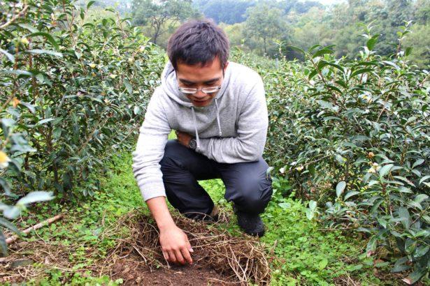 佛法原來是科學 農化碩士種茶心法 能量流轉生命之輪