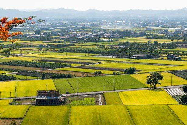 《農業基本法》立法捲土重來 農委會草案出爐 2月送政院