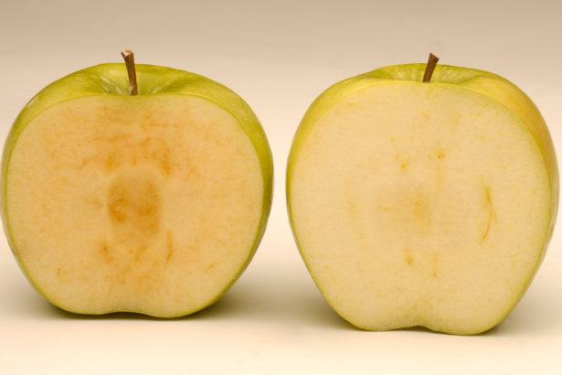 「不會黃」基改蘋果美國核准上市 學者擔憂台灣成下個叩關基地