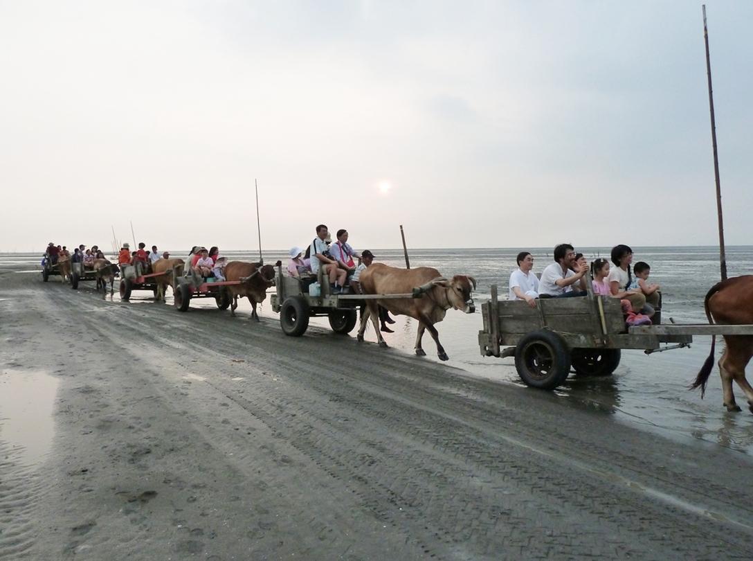 「牛車採集牡蠣」為大城濕地的特殊產業景觀(彰化環境保護聯盟提供)