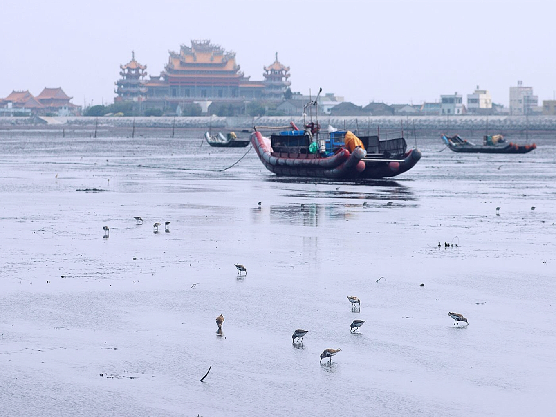 環團認為,大城濕地是台灣重要的河口生態系(彰化環境保護聯盟)