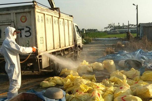 防禽流感 農委會:禽類禁運禁宰七天 白肉雞除外