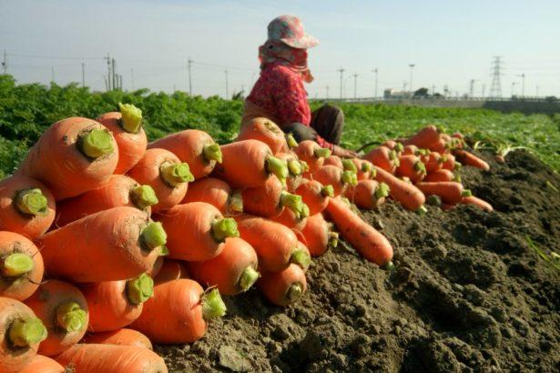 【公民寫手】【小農說】沒有農地,就沒有農業。沒有農業,就不是一個國家