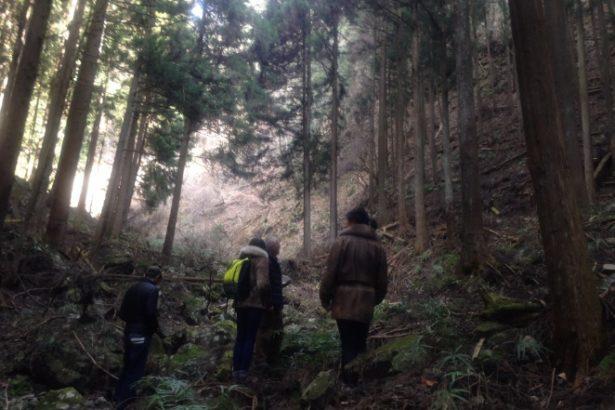 【公民寫手】最上之味/探訪東京森林秘境中的山葵田