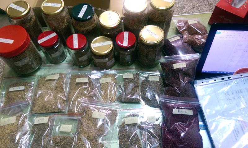 可樂穀農場已累積了數以百種不同地區、性狀、色彩的紅藜品種,將建構起台灣最完整的紅藜資料庫