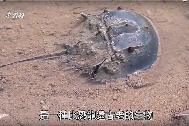 李根政/鱟與炮彈:刪海經的歷史場景
