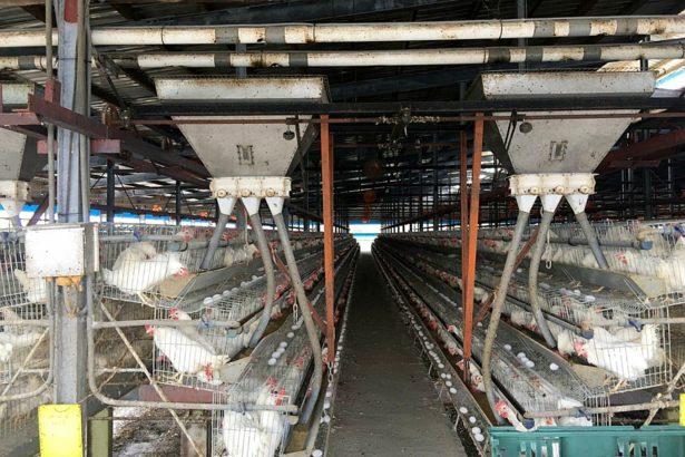 台灣首次雞蛋驗出戴奧辛異常 飼料或環境污染?食藥署:待確認