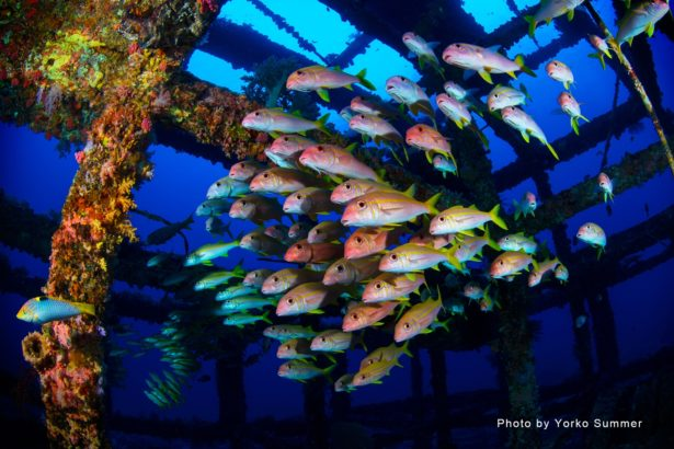 海上明珠綠島 潛水能見度世界少有!國際級水中攝影師Yorko Summer掛保證