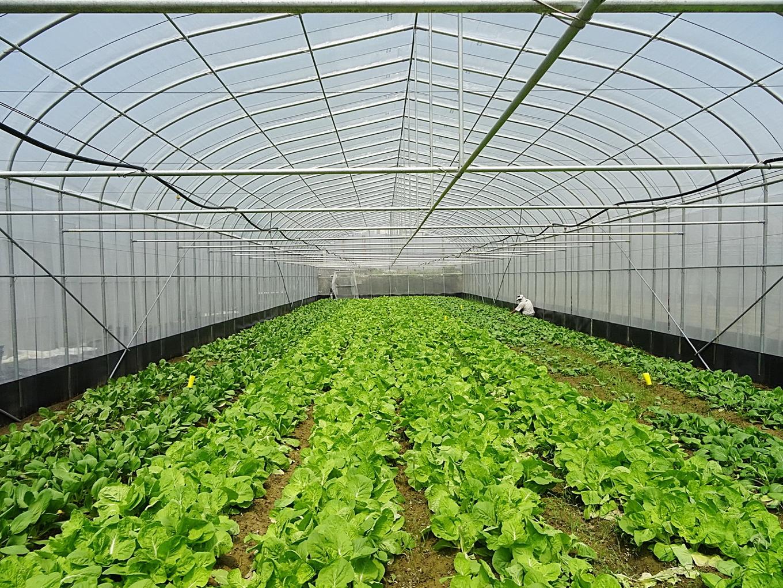 李博士採用強固型網室生產有機蔬菜