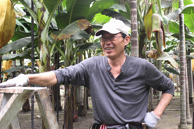 葉志雄每天照顧香蕉園,樂此不疲(攝影賴郁薇)