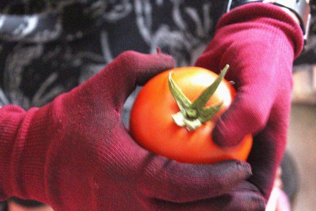天兵番茄女孩向前衝 蔡綉佳的魔幻牛番茄