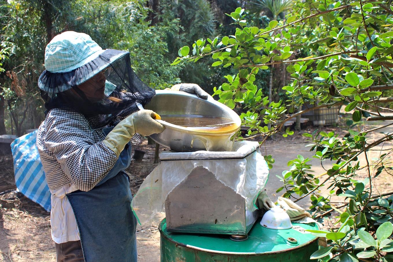 2吳菊芳說,蜂蜜採收需要三個條件:花要開滿、天氣配合、蜜蜂旺盛,但今年條件全都未符合(攝影_蔡佳珊)
