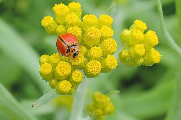 讓蜜蜂還有瓢蟲蜘蛛們回來!種綠籬與野花營造田邊棲地