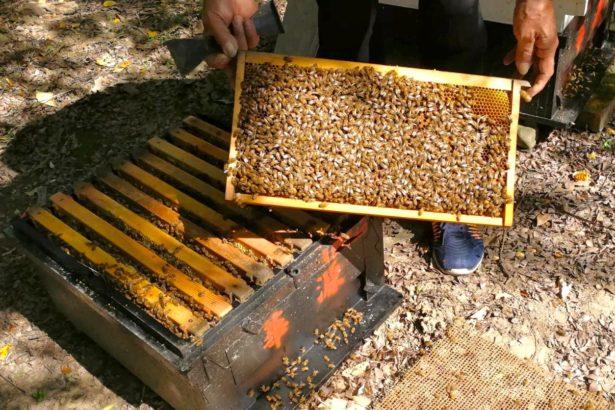 蜜蜂減收、農藥中毒問題大,農委會:將召開專案會議,並責成防檢局成立溝通平台