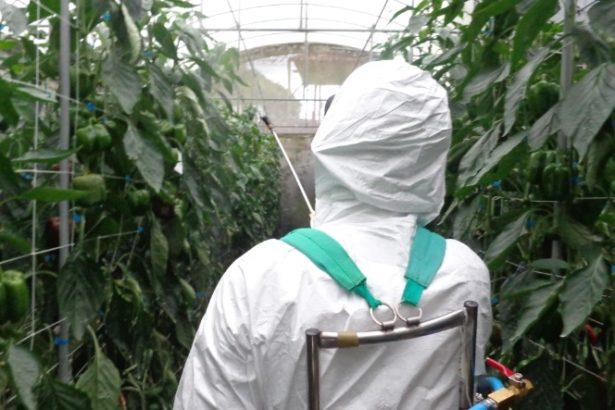 【公民寫手】費洛蒙、蘇力菌等有機可用的製劑,也是農藥,你信嗎?
