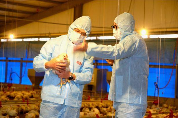 高規格白肉雞養成術!十八養場 養雞全程不用藥、吃非基改飼料