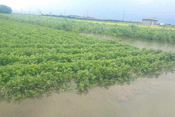 0605/梅雨鋒面滯留第三天 全台農損達9058萬元