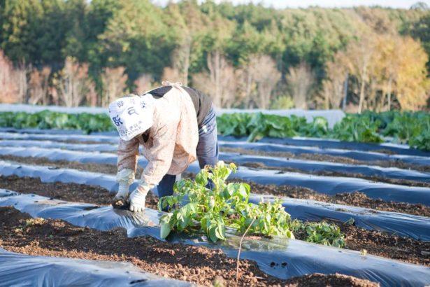 日本移工03/農業缺工嚴重 14% 仰賴便宜外國實習生