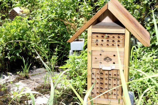 全民養蜂04/享受孤獨的獨居蜂 授粉效率奇高 幫吃田間害蟲