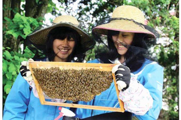 日本全民養蜂│從銀座到高中女生都來了,連機場也養蜂!