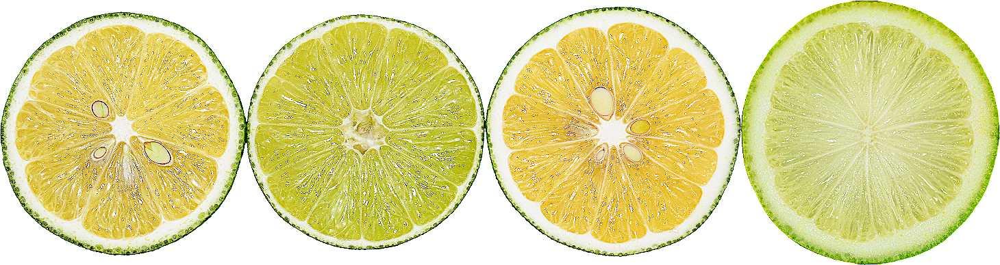 四者橫切面,由左而右依序為檸檬、萊姆、黃金檸檬、香水檸檬