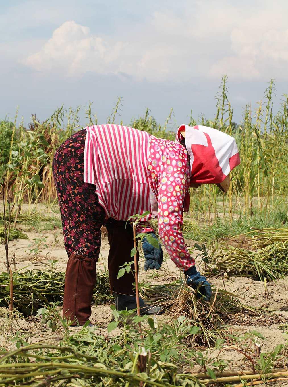 農友勞動造成長年骨骼變形,未被納入農保給付項目(攝影/Alittle)