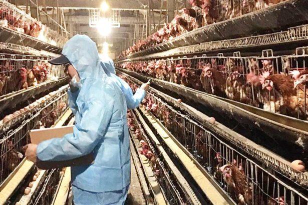 畜牧處表示,蛋雞養殖需全面改革跟上時代(圖片提供/南投縣政府)