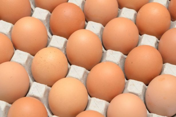 15596110 - eggs in a carton closeup view background