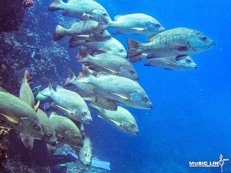 圖片來源/澎湖南方四島國家公園東西吉廊道海域劃設為「完全禁漁區」連署