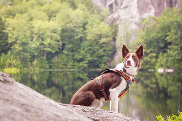 狂犬病升溫│保護毛小孩│這一年禁帶犬貓去國家森林、平地遊樂區